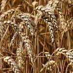 Ukrainische Agraraktien als Portfoliobeimischung (!)